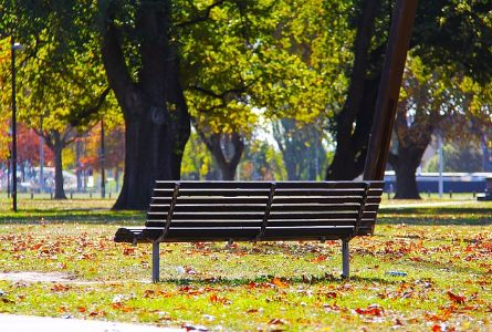 bench in a park in the fall