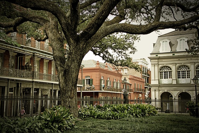 an old oak tree and French-style architecture in French Quarter